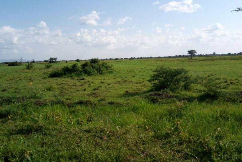 Bulambuli-land