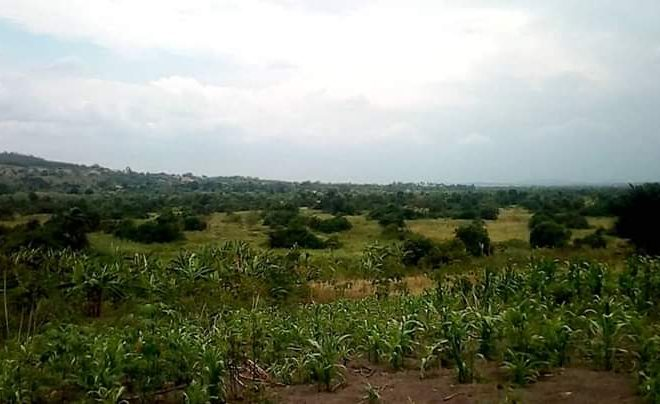 Land for sale in Kikyusa Luwero Uganda