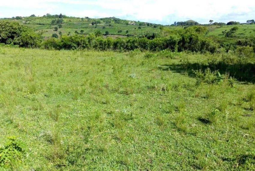 Farmland for sale in Mpigi Butambala Gombe