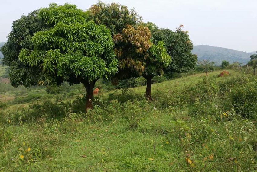 Land for sale Butambala Gombe