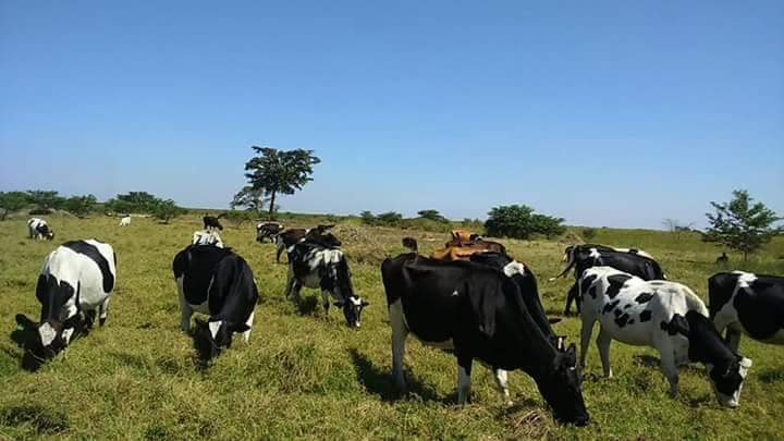 Farmland for sale in Uganda