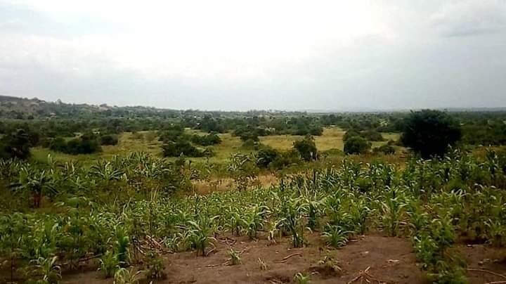 land sale Luwero
