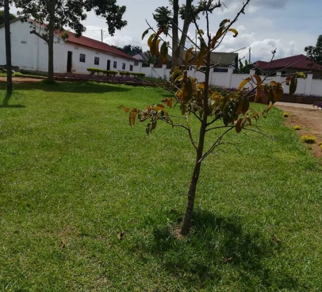 School for sale in Uganda